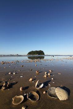 Papamoa Beach - Near Tauranga, North Island, E Coast.