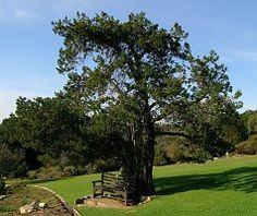 nodiflora Urban Park, Parks, Golf Courses, Parkas