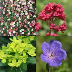 Buy Low Maintence Plant Combination Low Maintence 'Plant Combination': Delivery by Crocus.co.uk