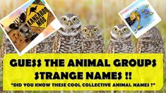 """GUESS THE ANIMAL GROUPS STRANGE NAMES !! 