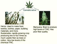 Know the diffrents    . . #cannabis #marijuana #cannabiscommunity #weed #happy420 #stonner #smartstoner #medicalmarijuana #follow #thegimmicks #like #me #legalizeit #ganja #legal #thc #cbd #cbdoil #plant #herbs #organic