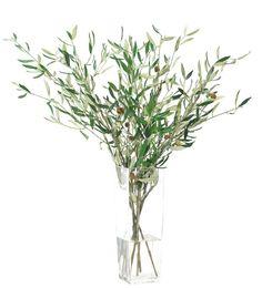 Olive Branch - NDI
