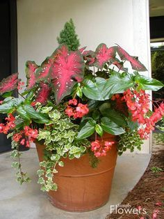 Beautiful container garden for the shade.