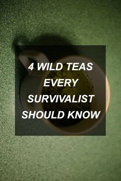 4 Wild Teas Every Survivalist Should Know | Survival Shelf | Survival & Preparedness Links