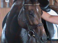 126 blog on horses - listening - good advice :)