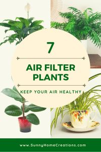 Air filter plants to keep your air healthy. Great ideas on which houseplants to . - Air filter plants to keep your air healthy. Great ideas on which houseplants to … Air filter plants to keep your air healthy. Great ideas on which houseplants to …