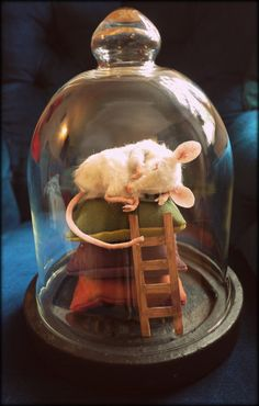Faux taxidermy white mouse in glass dome by winding on Etsy