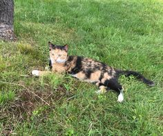 """A neighborhood cat ran up to a couple for the love and snuggles on their front porch, but little did they know that the sweet calico didn't come alone. Matthew Trenchik In late June, a couple from Pennsylvania came across an affectionate neighborhood cat who insisted to be loved.""""M..."""