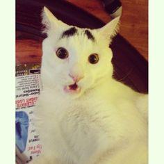 PHOTOS. Découvrez Sam, le chat avec des sourcils et nouvelle icone féline du Web