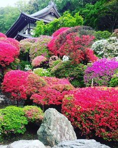 Togakuin Temple, Kawasaki, Kanagawa, Japan, Azalea Temple, Flower, Spring, 等覚院, 川崎, 神奈川, 日本, つつじ寺