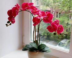 Лучшее время пересадки Своевременно пересадить орхидею очень важно, но нужно ли это делать сразу после покупки? В большинстве случаев цветы в магазине продаются в не очень привлекательных горшках и же...