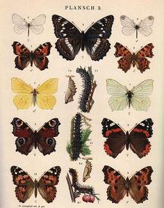 Svenska Entomologer och Naturforskare