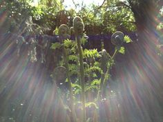 Special moment in the Chalice Well Garden in the UK. One of the most beautiful gardens, teaming with energy and light.