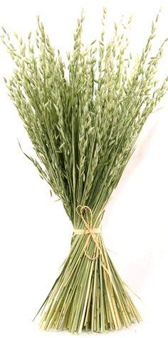 Dried Grasses / Avena (Oats)  $7.50-$12.50 a bundle