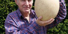 Auction over 500-year-old eggs