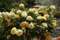 Piece of Eden: Bloom Day setembro 2015