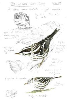 Bird Drawings, Art Drawings Sketches, Animal Drawings, Watercolor Sketch, Watercolor Bird, Digital Art Beginner, Bird Artists, Bird Sketch, Bird Artwork