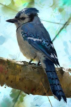 ArtStation - Little Blue Jay Study, Aaron Griffin