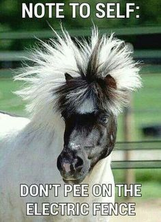Do you love horses? Are horses your favorite animal? If yes, then you'll enjoy these funny horse memes. Funny Horse Memes, Funny Horse Pictures, Funny Animal Jokes, Funny Horses, Cute Funny Animals, Animal Memes, Funny Cute, Horse Humor, Funny Pics