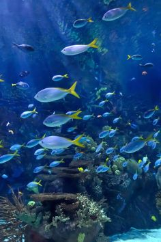 Central Mall Aquarium is a Tourist Attraction in Salina. Plan your road trip to Central Mall Aquarium in KS with Roadtrippers. Salina Ks, Salina Kansas, Road Trip Hacks, Road Trips, Vacation Trips, Vacation Ideas, Vacations, Sea World, Places To See