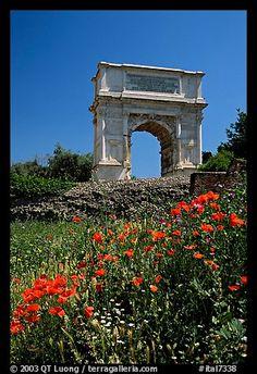 Popies and Arch of Titus, Roman Forum. Rome, Lazio, Italy (color)