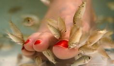 Fish Pedicures: The Cadillac of Flesh-Eating Spa Treatments...wha?