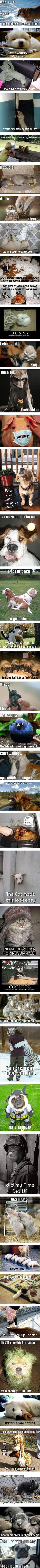 60 Funniest Animal Pictures With Captions #funnydogwithcaptions