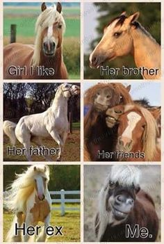 Girl he likes - Horses Funny - Funny Horse Meme - - Girl he likes Horses Funny Funny Horse Meme Girl he likes The post Girl he likes appeared first on Gag Dad. The post Girl he likes appeared first on Gag Dad. Funny Horse Memes, Funny Horse Pictures, Funny Horses, Cute Horses, Funny Memes, Horse Humor, Cat Memes, Hilarious Pictures, Meme Pictures