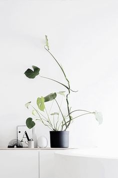 thatnordicfeeling: Photo by Riikka Kantinkoski (Silver blonde) Cactus Plante, Plants Are Friends, Piece A Vivre, Decoration Design, Plantar, Plant Design, Green Plants, Cacti And Succulents, Shades Of Green