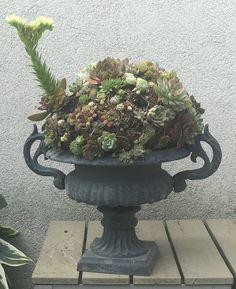 Succulent Arrangements, Succulents, Picture Design, Planter Pots, Pictures, Art, Photos, Art Background, Kunst