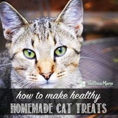 How to make healthy homemade cat treats!  >>  I'd definitely recommend using gelatin that is certified kosher (beef is a good choice) since most regular gelatin is made from pigs or horses. Besides being absolutely disgusting, that is just totally unsafe and unbiblical!