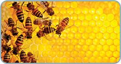 Kind words are like honey—sweet to the soul and healthy for the body. Honey Uses, Theodore Dreiser, Proverbs 16 24, Mother Nature Tattoos, Types Of Animals, Cure Diabetes, Wound Healing, Human Soul, Animal Wallpaper