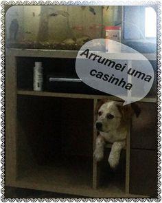 #Guenever  #Cachorro  #Dog  #chien  #Perro #BlueHeeler #RedHeeler #Heeler #BoiadeiroAustraliano #AustralianCattleDog