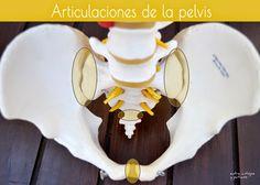 Entre antojos y patucos - Pasión por la maternidad: Articulaciones de la pelvis.