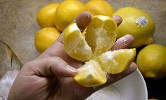 הלימון הוא פרי מאוד שימושי ותכליתי. יש בו הרבה תכונות מרפאות שמצוינות לבריאות…