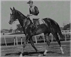 Beldame (1901-1924). 1904 Horse of the Year