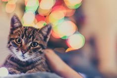 Rocklin Ranch Veterinary Hospital | Holidays With Pets: What New Pet Owners Need To Know