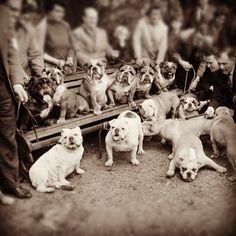 Vintage Bulldogs!