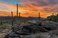 Sonoran Desert Sunset I caught a big sunset this in the mountains in Phoenix, Arizona. You can see the saguaro cacti, the signature plant of the Sonor... - Darren Huski - Google+