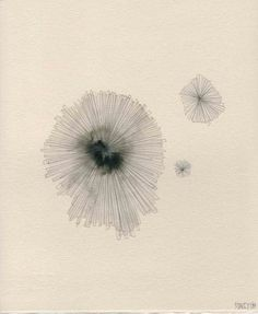 coral. drawing by stacey rees