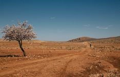 Lian van Leeuwen was one of the 2020 Atlas Mountain Race's official photographers, and she spent a week chasing riders across Morocco for this report Green Copper, Atlas Mountains, Silk Road, Mountain Biking, Morocco, Touring, Country Roads, Racing, Wall