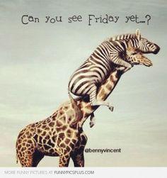 Thank the Gods its Friday