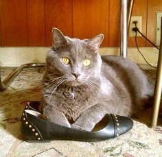 My cat Tipper. Marlo, Ohama, NE - 7/18/2015