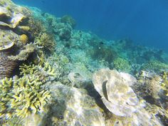 Snorkeling around Linapacan, clearest waters in the world.