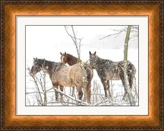 Horses in the Snow Framed Print by Brian Mollenkopf Art Prints For Sale, Fine Art Prints, Framed Prints, Fine Art America, Moose Art, Snow, Horses, Delaware, Art Work