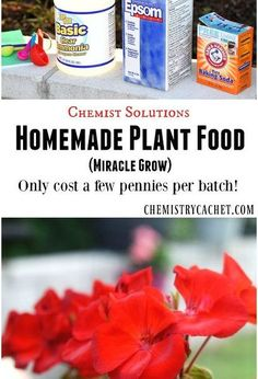 easy homemade plant food miracle grow , gardening, how to, plant care