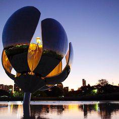 Flor de atardecer, en Plaza de las Naciones Unidas. Awesome sunset in Plaza de las Naciones Unidas. #BuenosAires #Argentina #FloralisGenerica #Flower #NacionesUnidas #Turista #turistaenbuenosaires #Turismo #Tourist #Tourisim #Design #Diseño #Photography