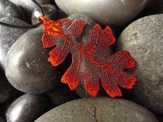 beautiful oak leaf!