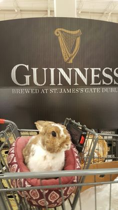 Guinness, Laundry Basket, Bunnies, Wicker, Organization, Animals, Getting Organized, Organisation, Animaux