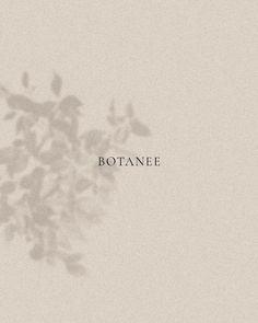 A beautiful, minimalist and elegant logo speaking of feminine grace and timeless luxury. Botanical brand with a chic and classic serif typography and branding. Creative Logo, Food Logo Design, Web Design, Elegant Logo Design, Minimalistic Logo Design, Luxury Logo Design, Minimalist Graphic Design, Minimalist Font, Elegant Fonts